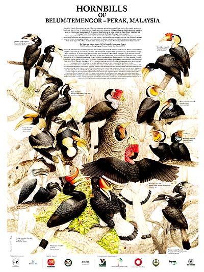 Tan Kean Chong Hornbill poster 400px
